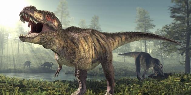 La femmina di Tyrannosaurus rex fecondata