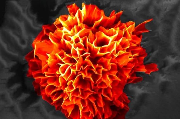 Un'esplosione di microfiori