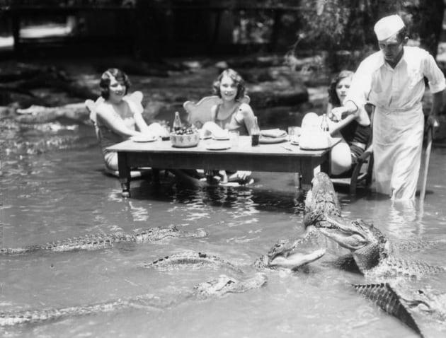 Come eravamo: il parco degli alligatori