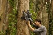 Un cellulare registra il suono della foresta e scopre i bracconieri