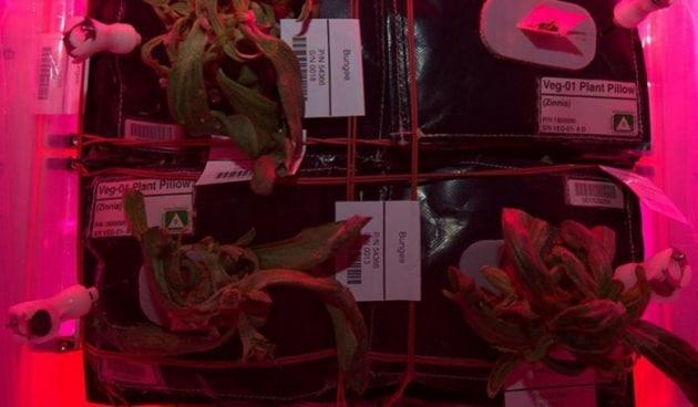 Verdure spaziali: l'orto-serra della ISS