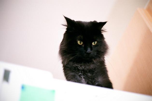 Perché i gatti sono così selettivi in fatto di cibo?