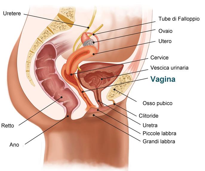 start vagina nederlandse sex sites