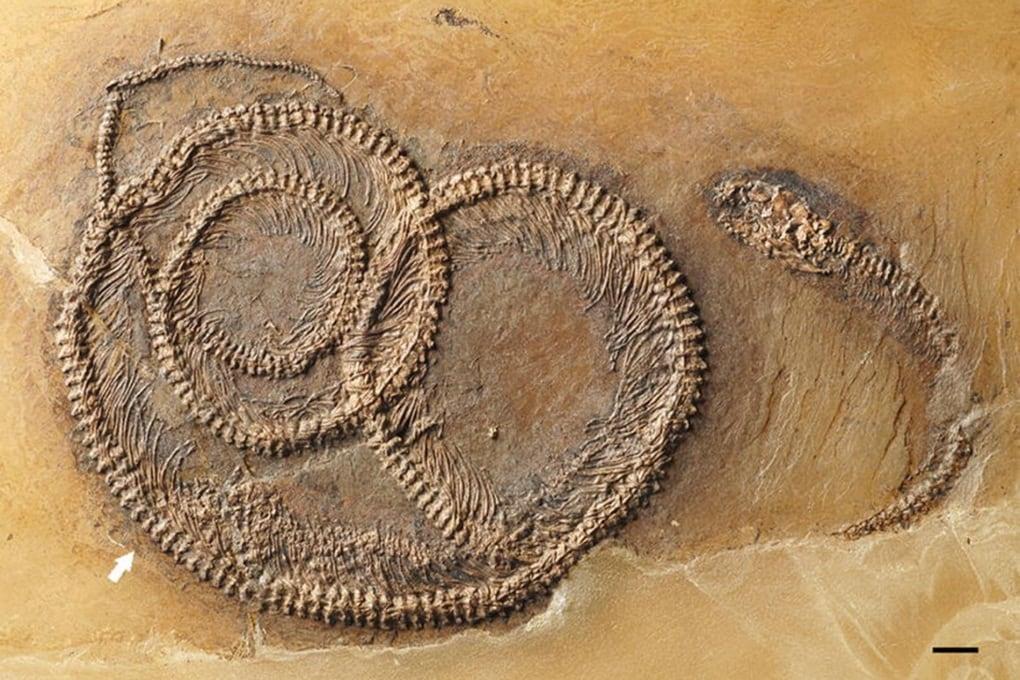 Tre fossili trovati l'uno dentro l'altro