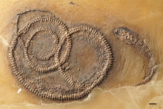 01-snake-fossil-turducken.ngsversion.1473260401059.adapt.1900.1