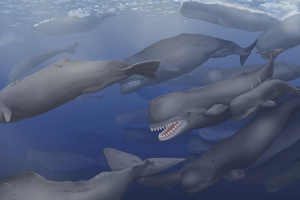 Il fossile che prende il nome da Moby Dick