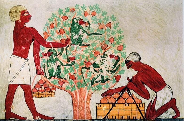 Matrimonio In Egitto : Pranzi e banchetti nella storia focus