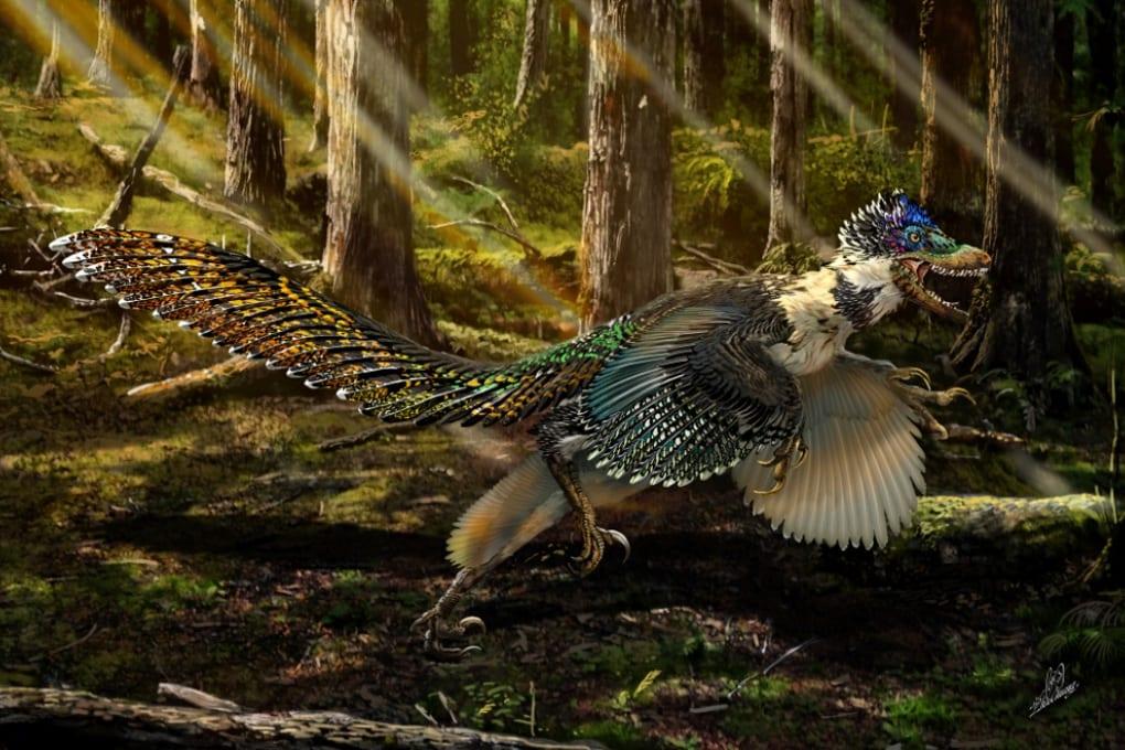 Il cugino piumato del Velociraptor