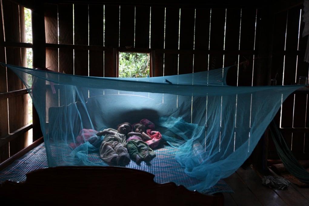 Malaria, ultima frontiera: per eradicarla si curano direttamente le zanzare