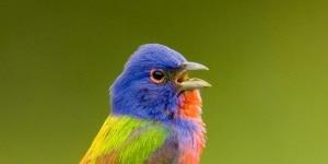 etologia, uccelli, adattamento, traffico, urbanizzazione, rumori delle città, canto degli uccelli