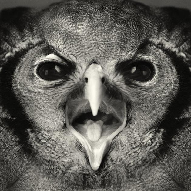 Animali dalle espressioni umane