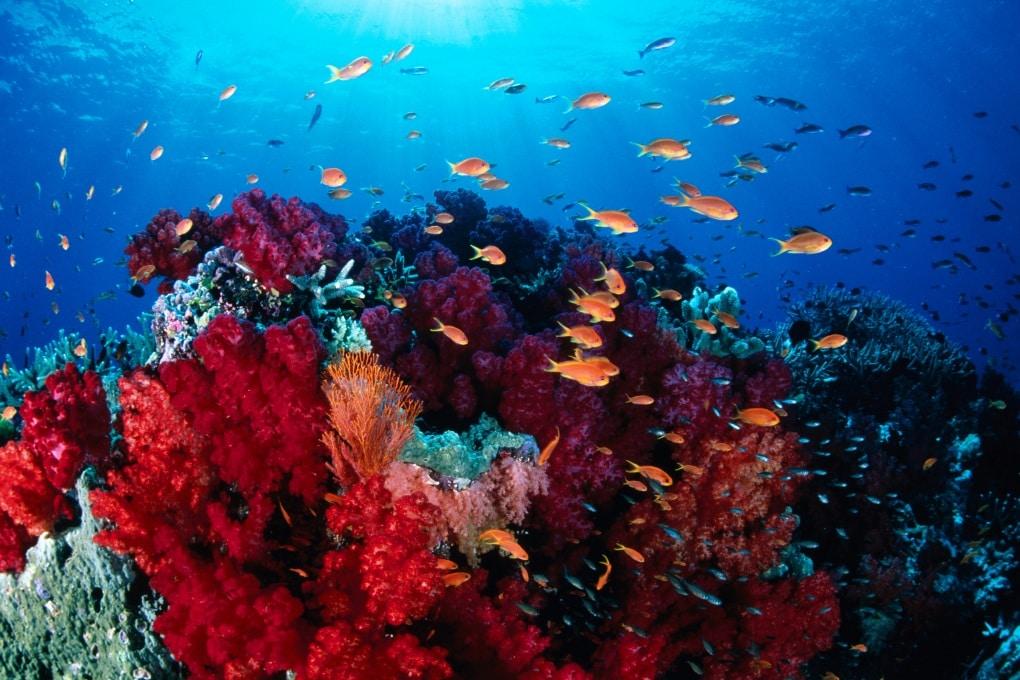 Corallo sintetico per pulire gli oceani