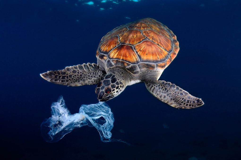 Il 52% delle tartarughe marine ha ingerito plastica
