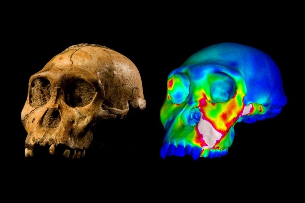 L'Australopithecus sediba non era uno