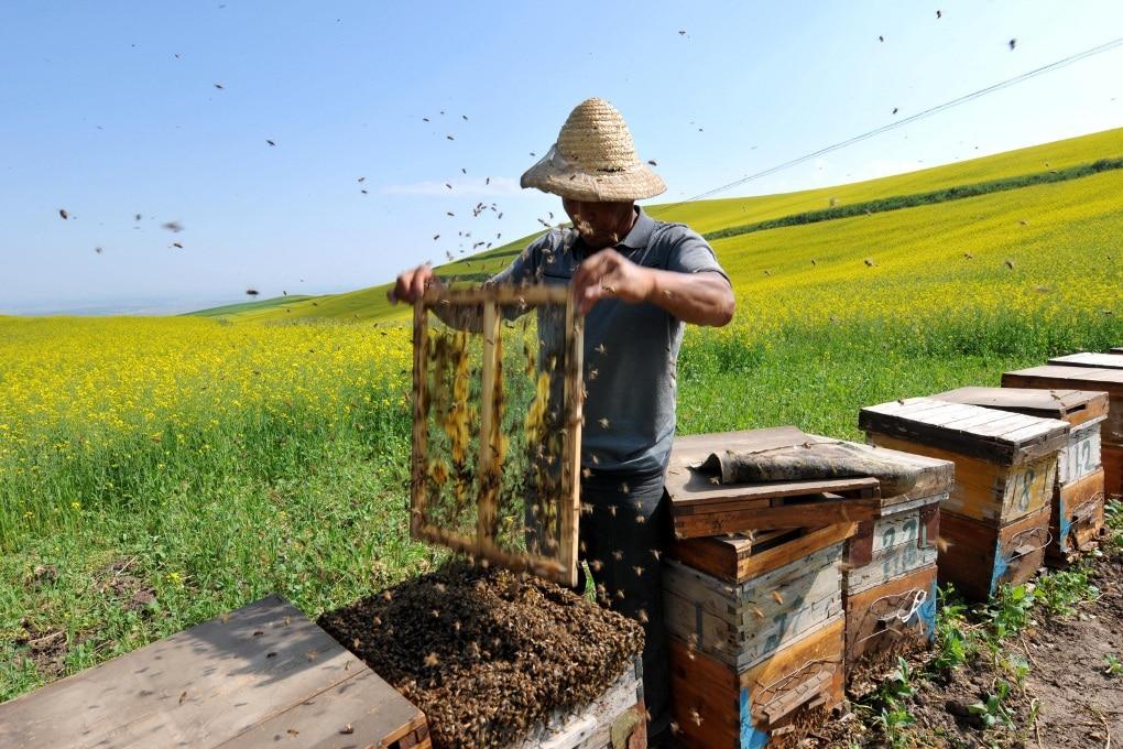 Siamo apicoltori da 9 mila anni