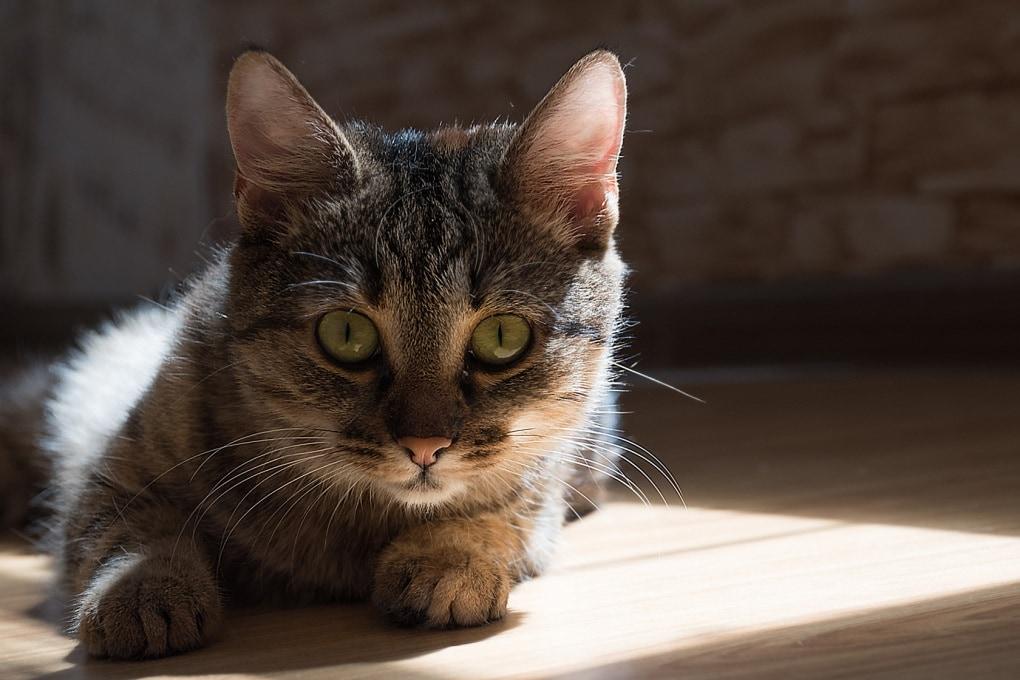 La fisica dei gatti (non solo di Schrödinger)