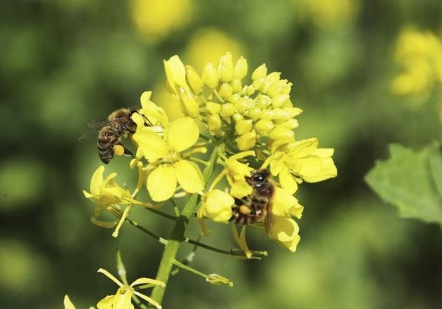 Le api hanno la lingua?