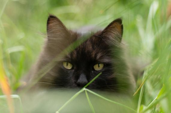 gatti, pet, animali domestici, felini, animali da compagnia