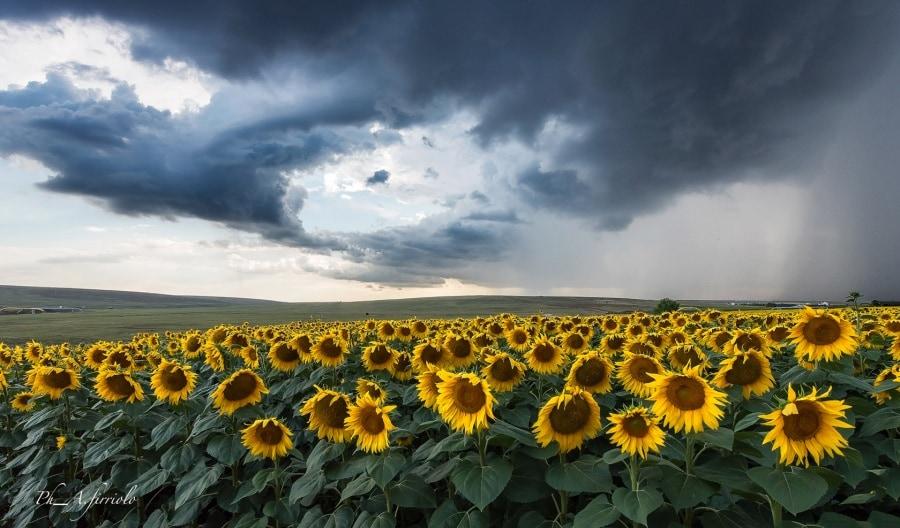pronti-per-la-pioggia_antonino-firriolo