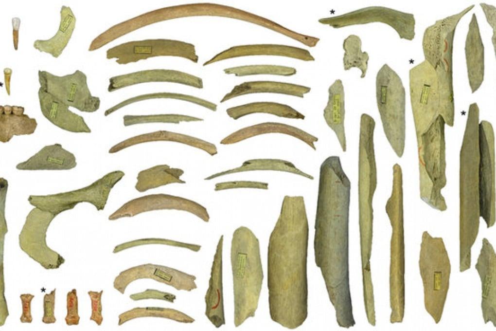 Anche i Neanderthal erano cannibali