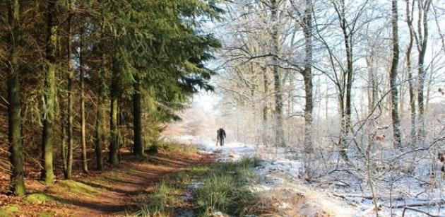 Il nostro sistema immunitario varia dall'estate all'inverno