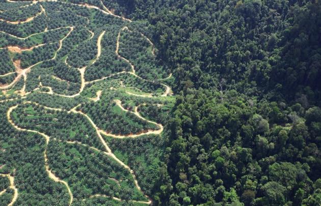 Cinque domande sull'olio di palma