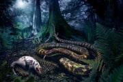 snake_92072_web