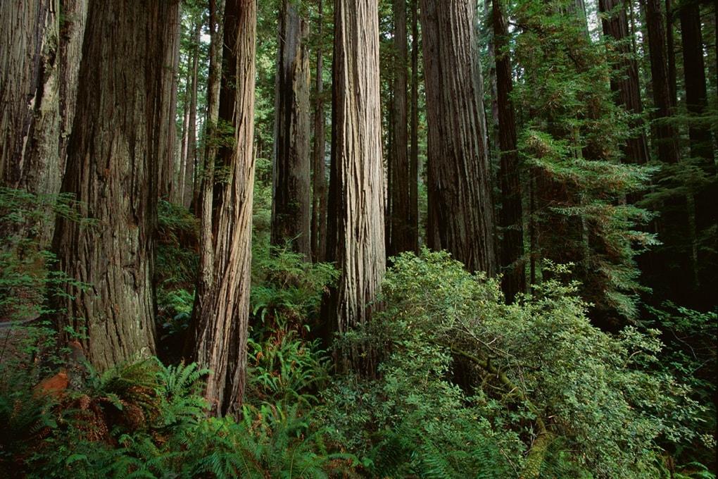 Sulla Terra ci sono più alberi del previsto