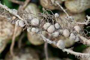 11 ragioni per amare funghi e batteri