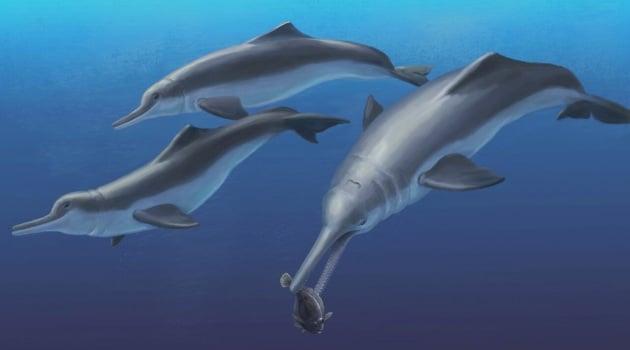 Un (nuovo) delfino di 6 milioni di anni fa
