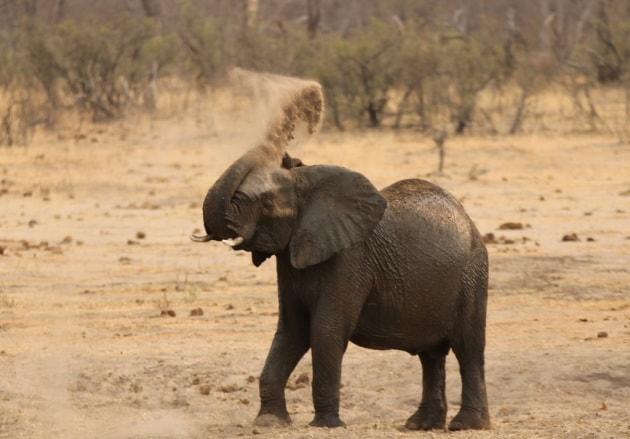 Perché gli elefanti odiano i droni