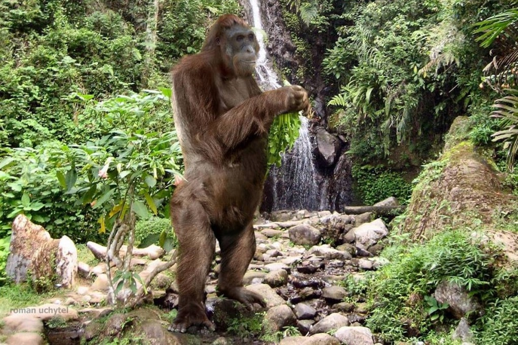 Il Gigantopithecus si è estinto per fame 100.000 anni fa