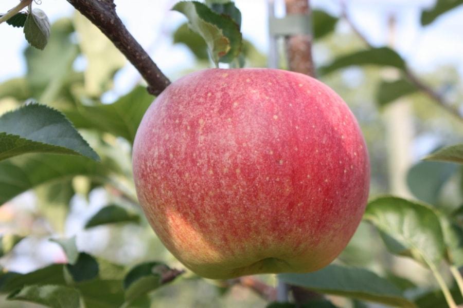 10 cose che (forse) non sai sulla frutta