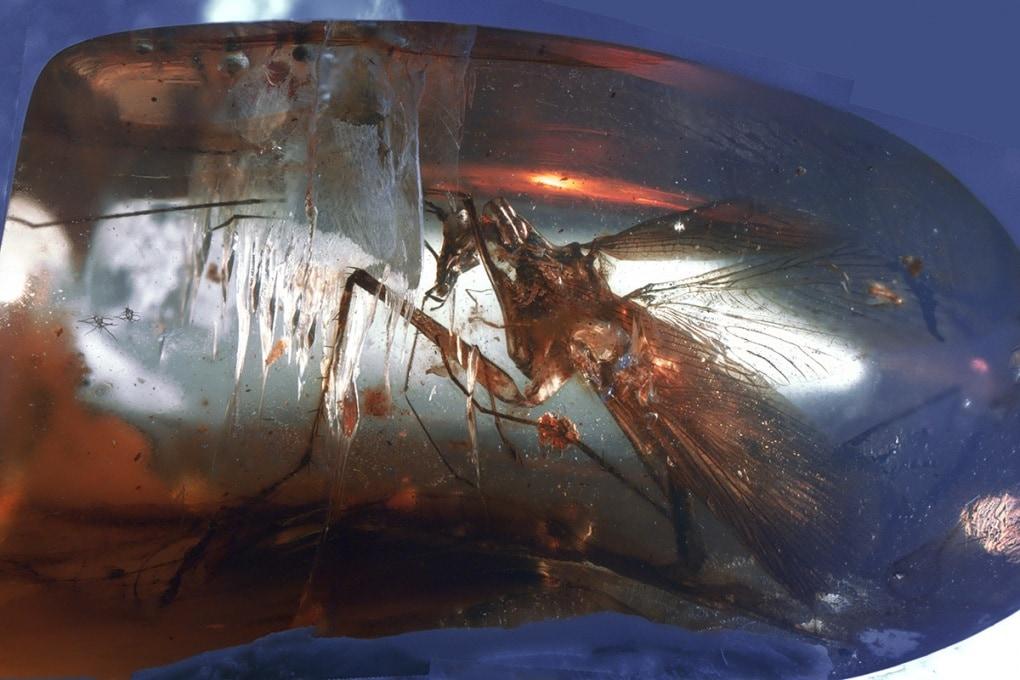 Lo scarafaggio predatore che visse con i dinosauri