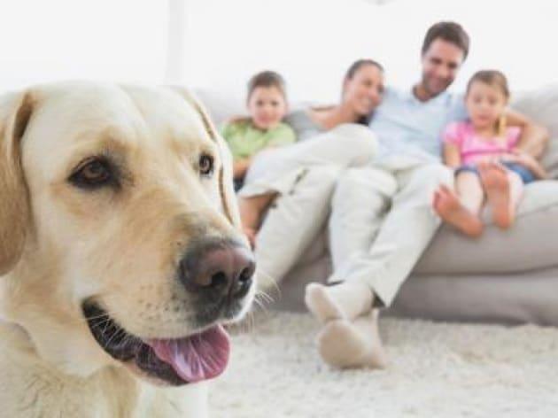 Pet Care Vale 1 8 Miliardi Di Euro Il Mercato Del Cibo