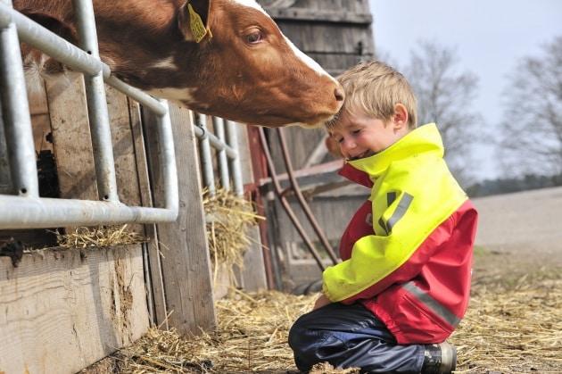 Al riparo dall'asma se si vive in fattoria