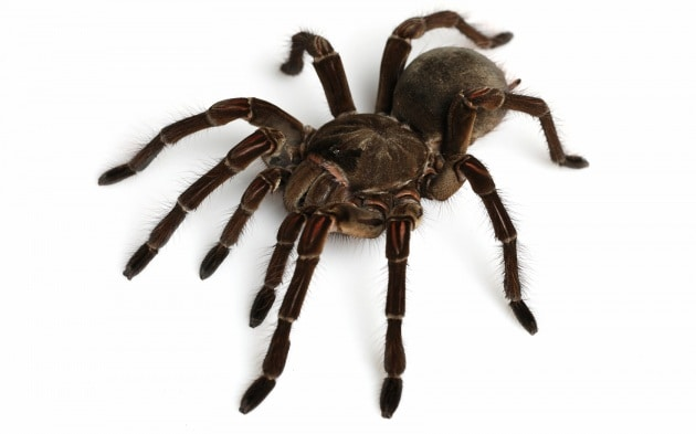 Spiders: ragni vivi in mostra a Genova