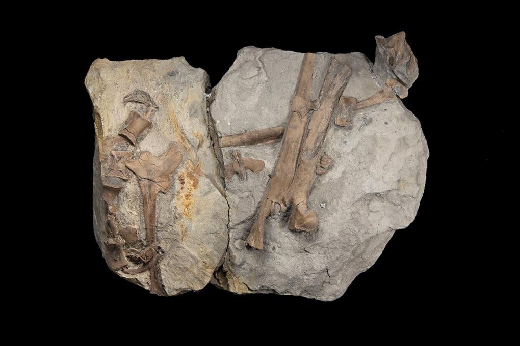 Il più antico fossile di dinosauro del Giurassico