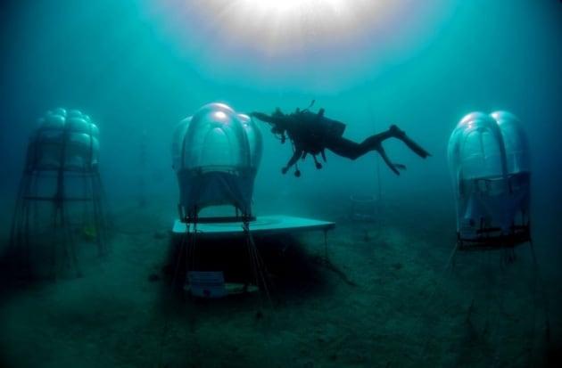 L'orto sottomarino di Noli, in Liguria