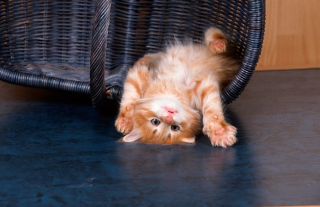 I video con i gattini fanno bene allo spirito
