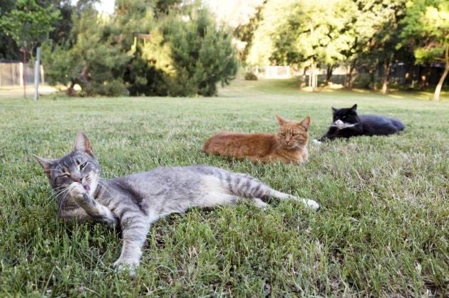 Il gatto ha davvero bisogno di mangiare erba?
