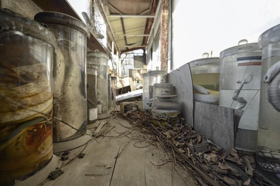 Il laboratorio abbandonato dei serpenti for Veleno per serpenti