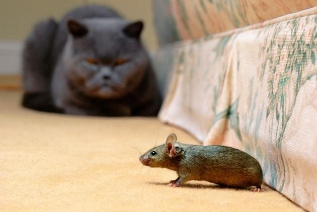 Che cosa c'entrano i topi con la balbuzie?