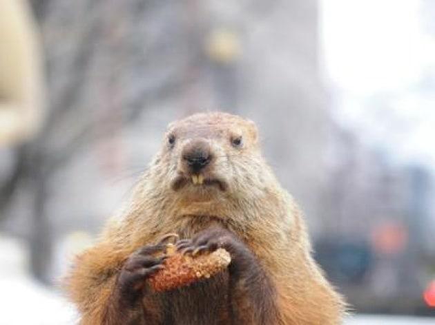 Il giorno (sì) della marmotta, alt del Tar di Bolzano alla loro uccisione