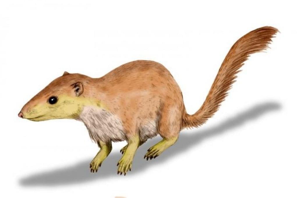I mammiferi erano già numerosi e diversificati prima della scomparsa dei dinosauri
