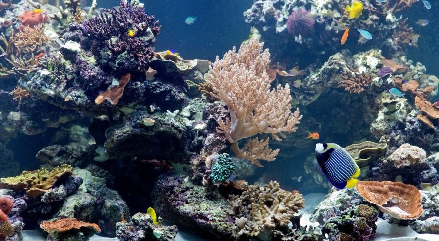 aquariumnhmlondon