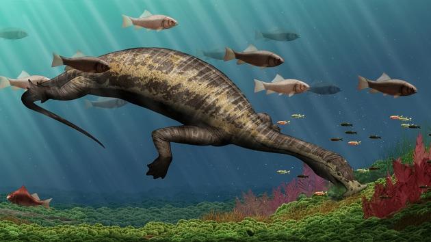 Atopodentatus unicus: l'aspirapolvere dei mari