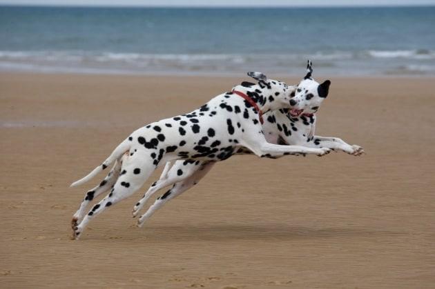 Anche i cani copiano le espressioni dei loro simili