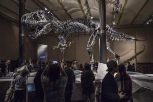 Carbonifero, foreste tropicali, paleontologia, anfibi, mammiferi, amnioti, dinosauri, evoluzione