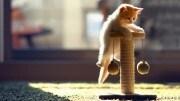 Come far giocare il vostro gatto